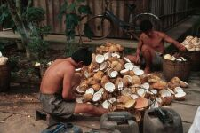 Coconut factory